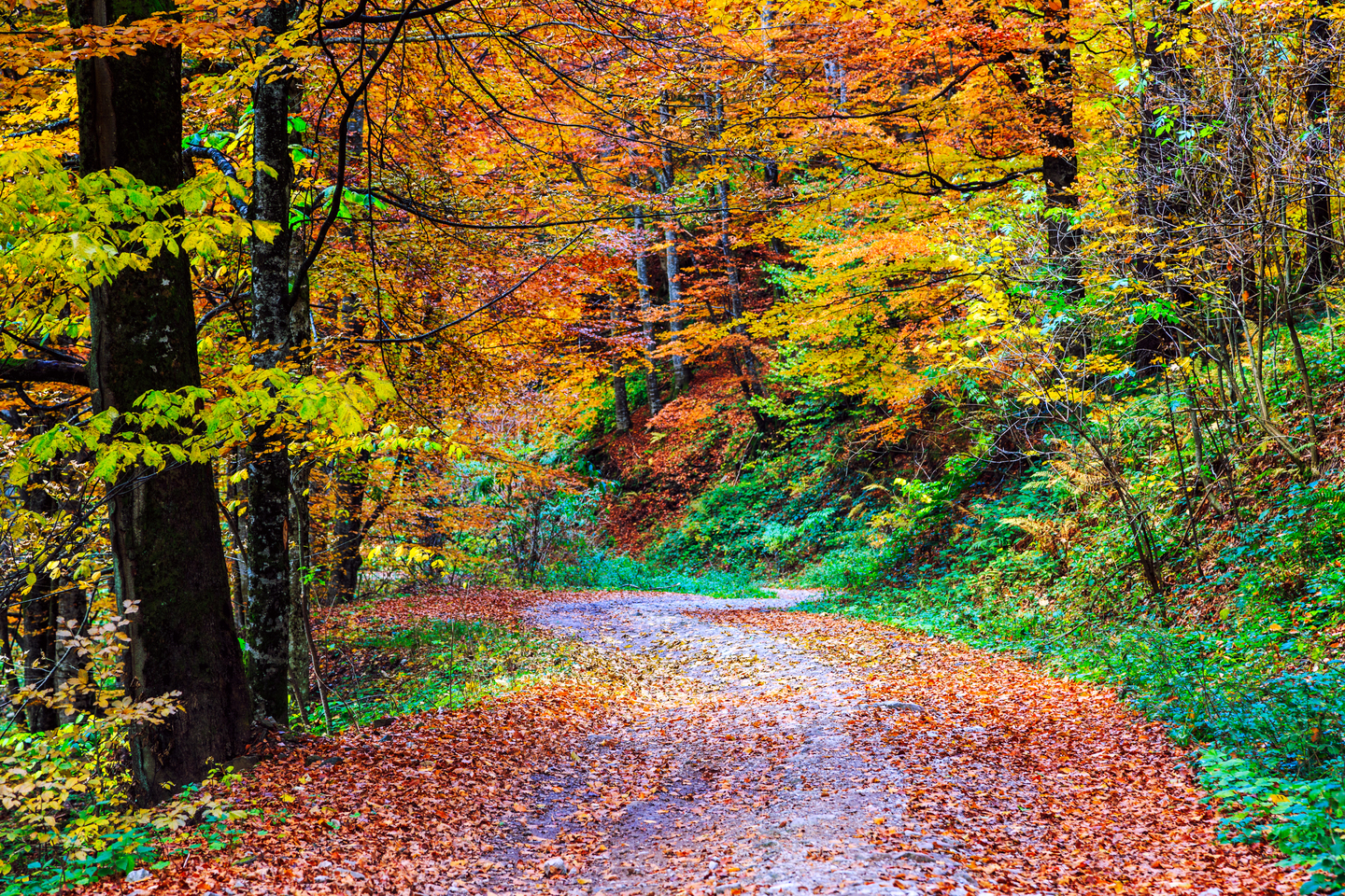 Footpath winding through the colorful fall forest